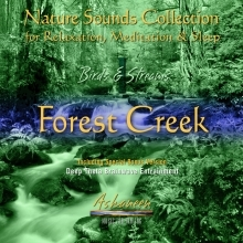 Birds & Streams 1 - Forest Creek